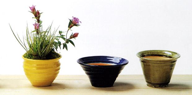 植物ヘッダー